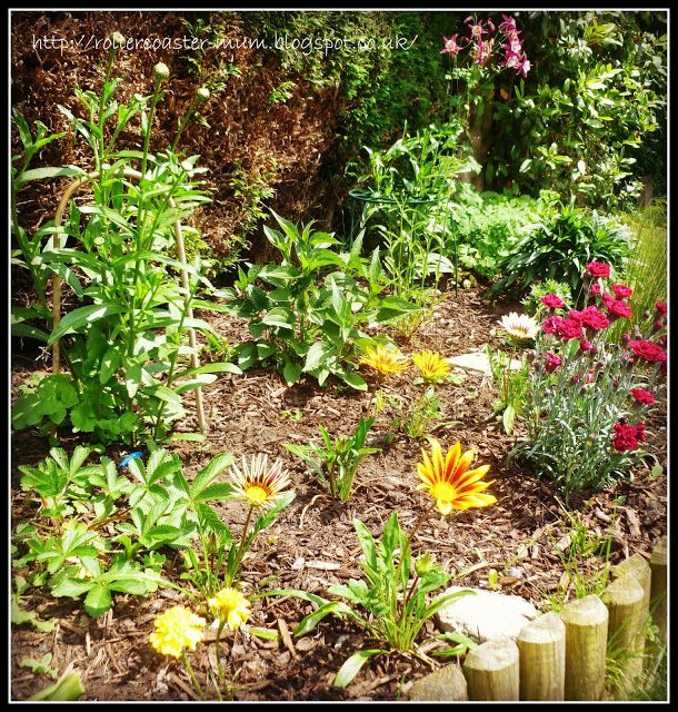 Perennials flower bed gardening pinterest for Perennial flower bed design