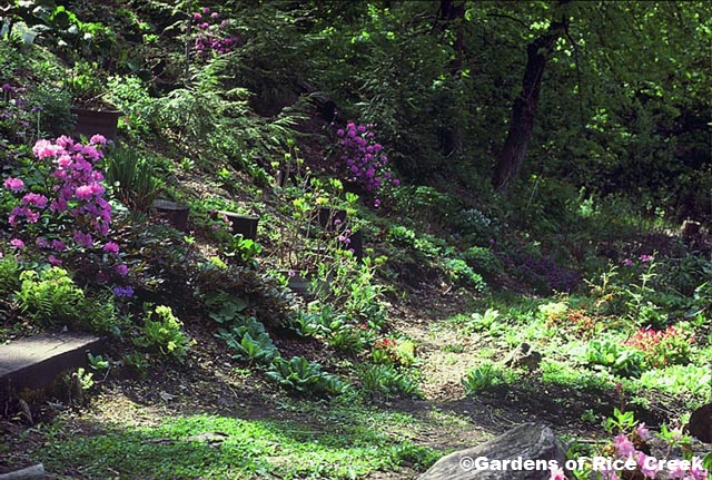 Landscaping Shady Hillside : Shady hillside garden back yard