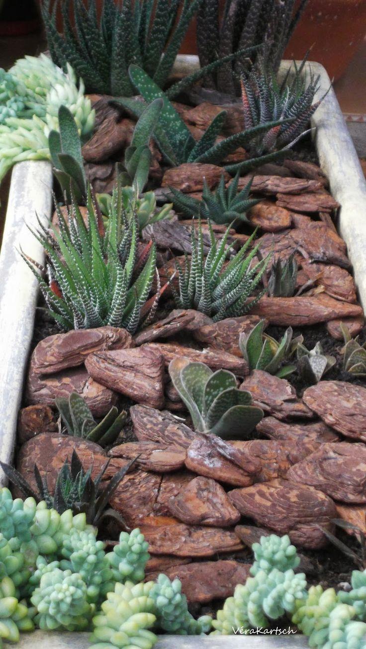 Succulents In Unusual Ground Planter