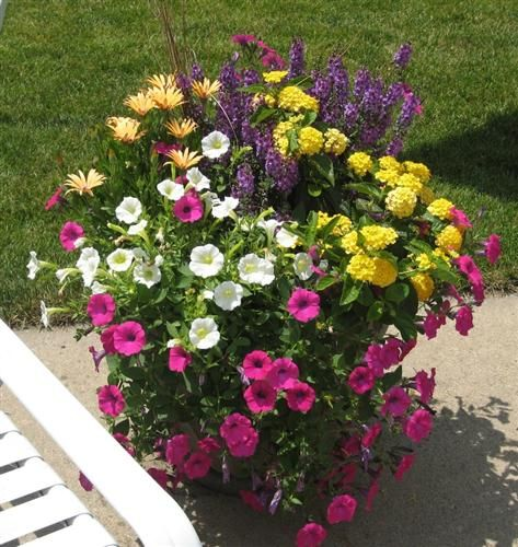 Butiful flower pot with wave petunias flower pots - Wave petunias in containers ...