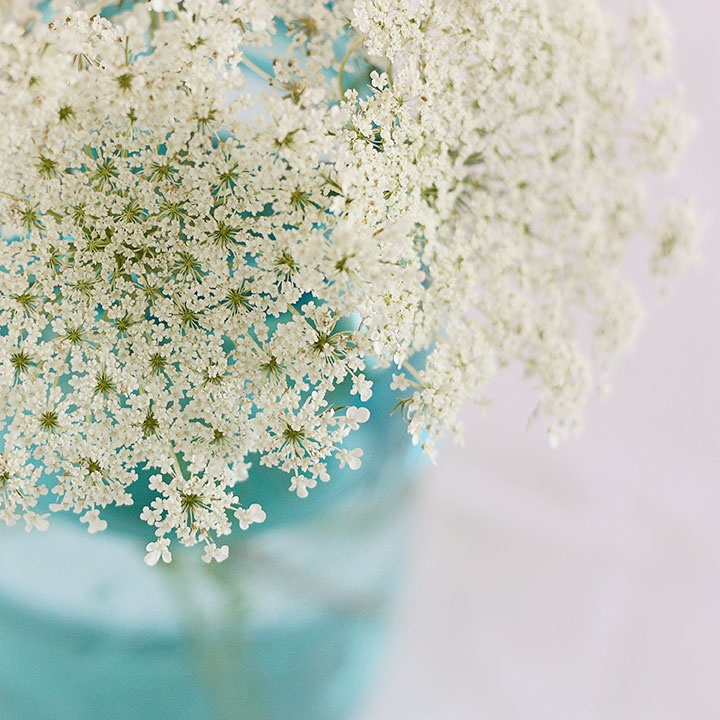 queens anns lace and an aqua vace