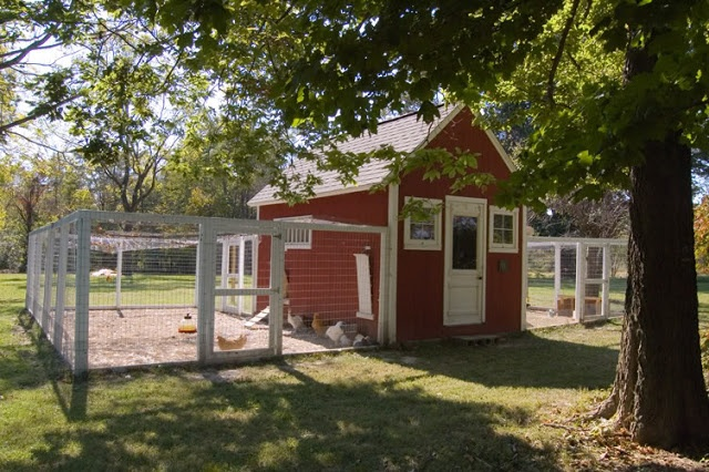 Red white chicken coop and yard let 39 s cluck pinterest for Red chicken coop