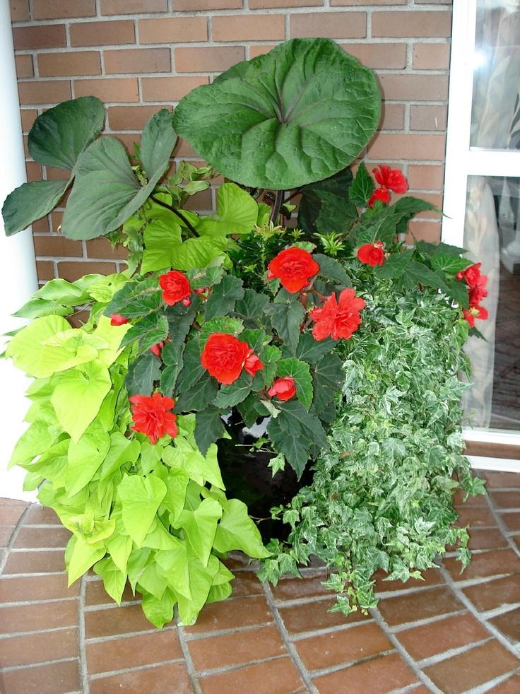 Container garden recipes for shade container garden ideas for shade photograph shades - Container gardens for shade ...