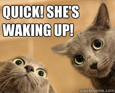spying cats! funny humor jokes memes