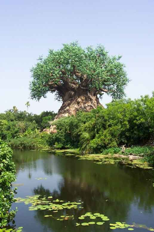 It has been described as a mystical tree in India, but having been to Animal Kingdom, I know better...