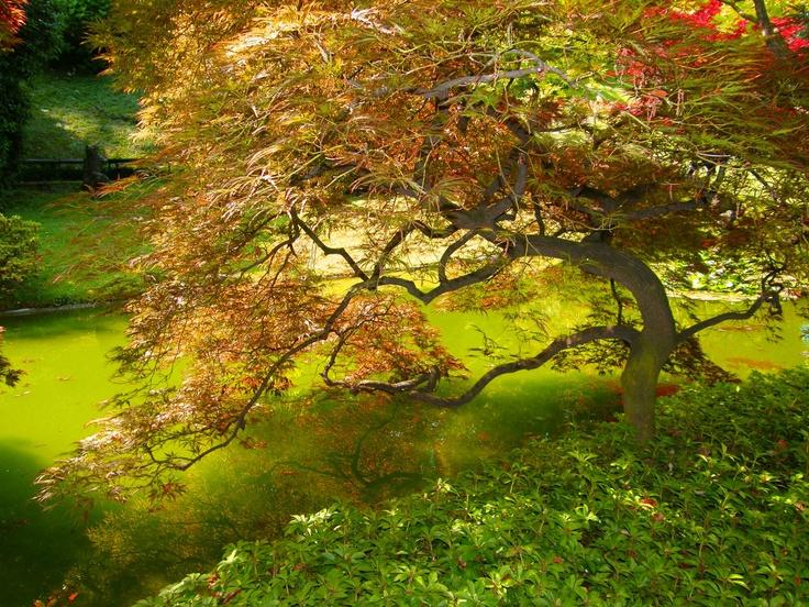 Tree of Life, Bellagio, Italy