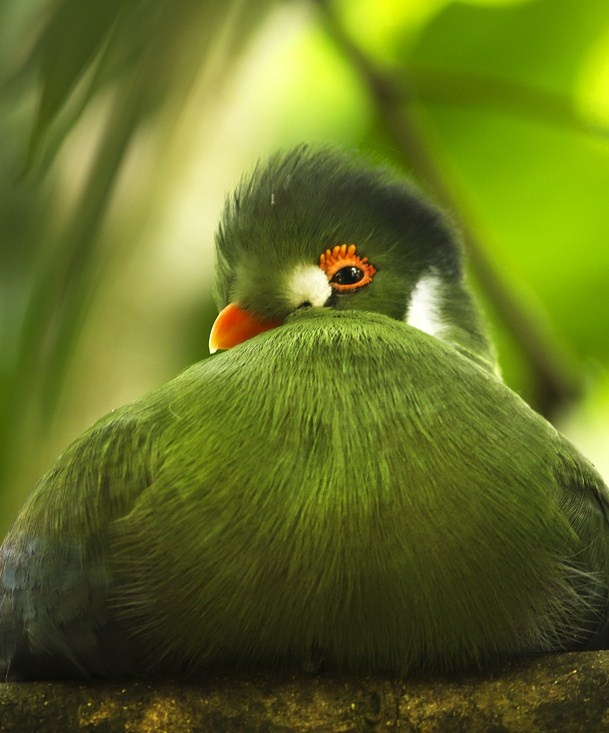 that look   CoLoR ~~ ThoSe gREEn ThinGs   Pinterest