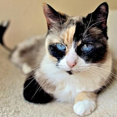 Cat Adoption Kalamazoo