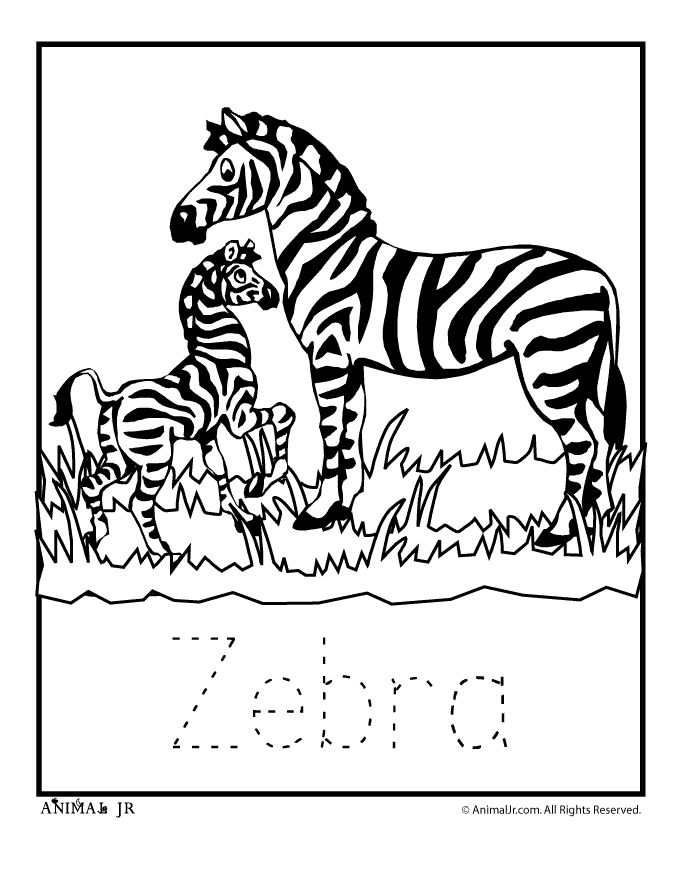 Printable Coloring Pages Of Zebras
