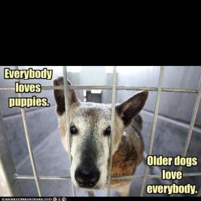 I ♥ old dogs!