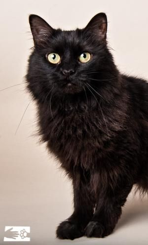 Hello feline fans genie is ready to make all your wishes come true