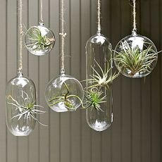 Hanging Glass Planters $9.00