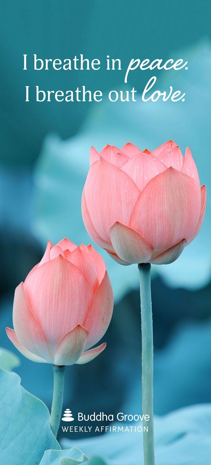 Buddha lotus flower quote gallery flower decoration ideas lotus flower quote buddha images flower decoration ideas buddha lotus flower quote image collections flower decoration mightylinksfo