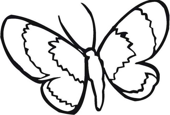 animals simple butterfly coloring pages kids coloring pages pinte