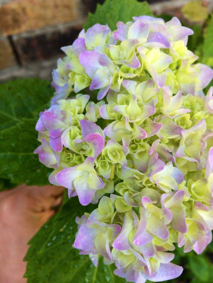 ... gardening #houston #pretty #purple #planting #summer #spring