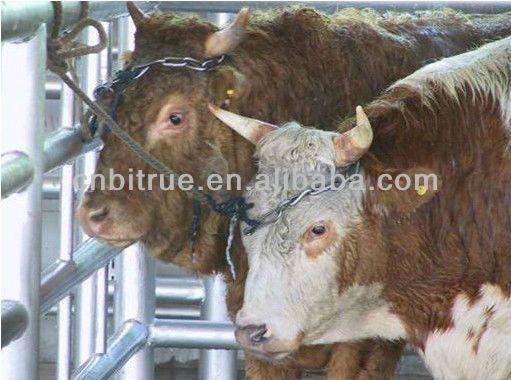 cattle slaughterhouse equipment $6000~$9000: www.pinterest.com/pin/528469337497011434