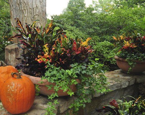 Fall container garden | gardening ideas | Pinterest