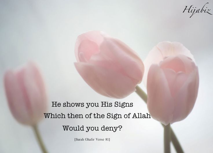 He Shows You His Signs (Quran 40:81)