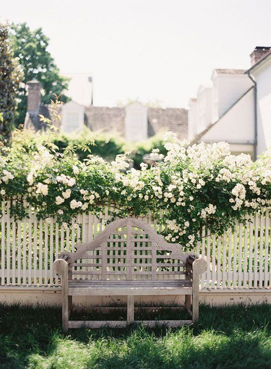 climbing roses, pretty wood bench