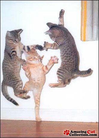 kitten business