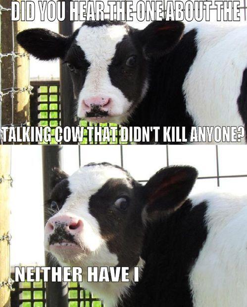 killer cow lawlz!