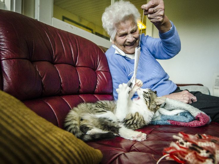 cute old lady with cat animals pinterest