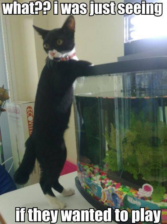 Cat fish funny want to play animal funnies pinterest for Fish video for cats
