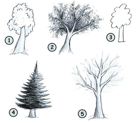 How to draw cartoon trees step 4