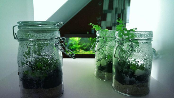 Slaapkamergeluk Plant : Mini terrarium, plants, mini world Succulents ...