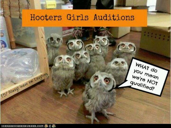hooter girls funny critters pinterest