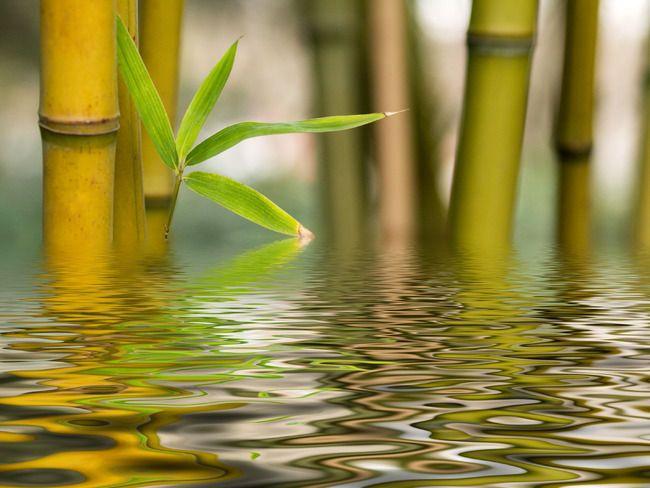 Bamboo and water zen spa pinterest - Image zen nature ...