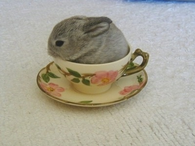 cute bunny in a cup!