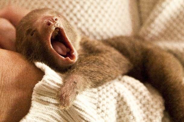 yawning baby animals - photo #13