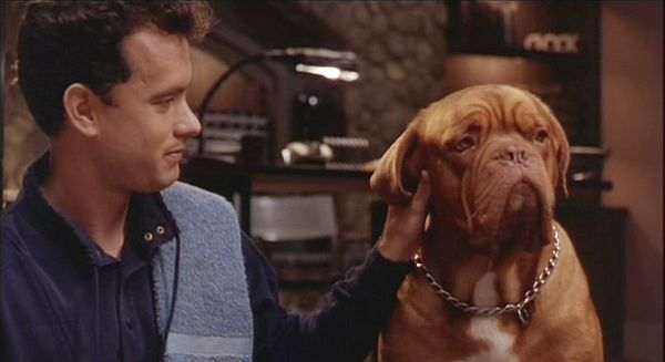 turner and hooch...our favorite movie with a dog just like Virg.