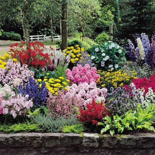 Lovely colourful plants that would look great and work as a border in our garden.