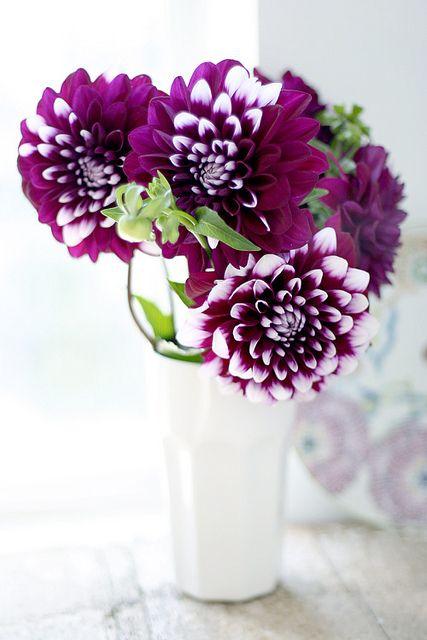 love the vibrant purple
