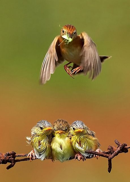 Bird photographer - Octavianus Darmawan