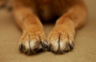 I just love dog paws