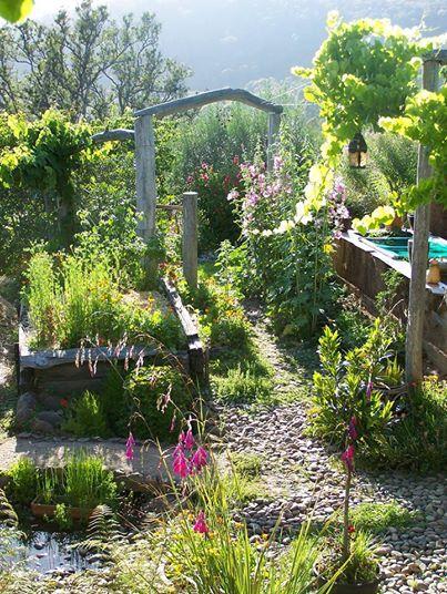 Backyard Permaculture Gardening Australia : Found on permacultureaustraliaorgau