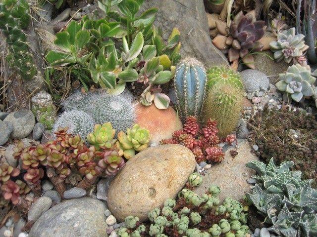 Succulent rock garden Succulents Pinterest