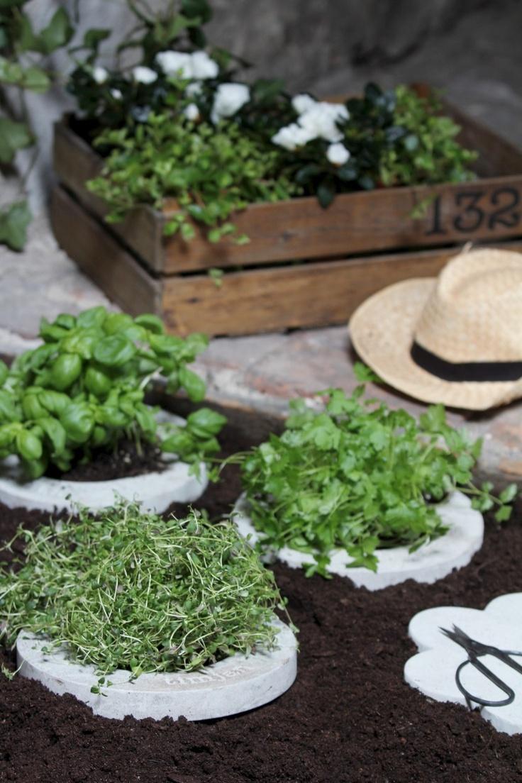 Small Herb Garden Landscaping Pinterest