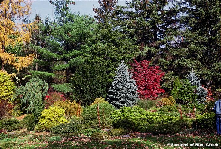 Mixed shrub border landscaping pinterest - Shrubbery for privacy ...