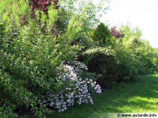 Un arbre persistant pour cacher une vue? - Jardinage - FORUM Vie