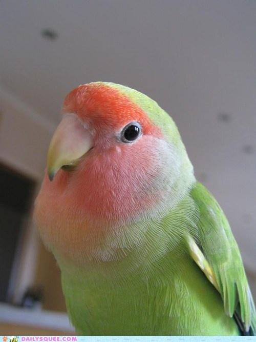 Reader squee the look of love bird