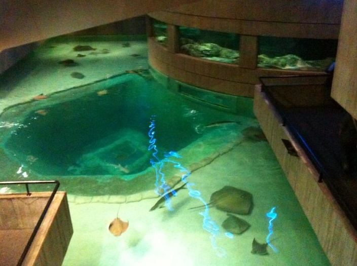 Baltimore Aquarium Places Pinterest