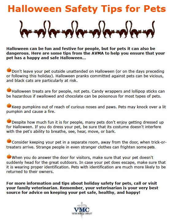 302726406176615316 on Halloween Safety Rules