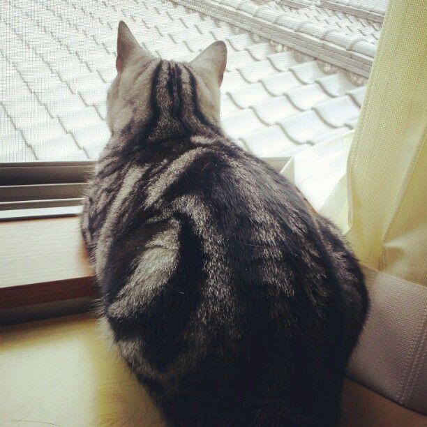 お天気悪いにゃ~ #cat http://t.co/8BXrhVWP