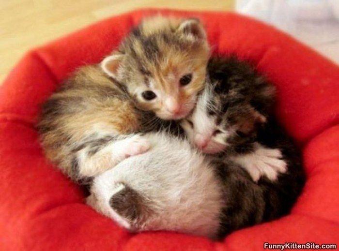 Kitten Sleeping | A5-....baby cute kittenp(^-^)qp(^^)q(o^-^o ...