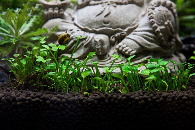 Oliver Knott - fluvial hedge 2 (detail) Aquascaping Pinterest