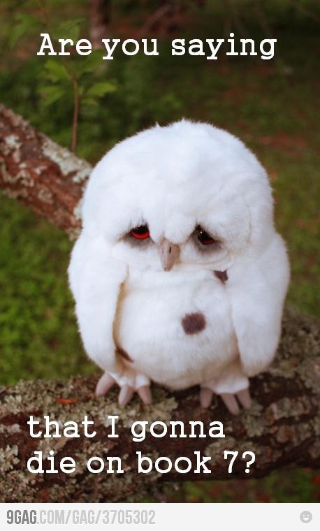 Poor Hedwig =(